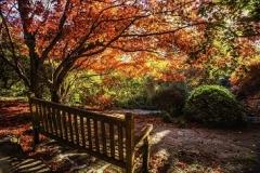 Mt Tomah Botanic Gardens 02